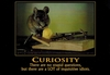 Curiosity (Fun Office Sign) - Velcro & Magnetic!