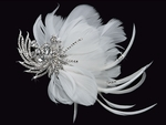 NEW!!! Paris - Beautiful feather crystal Hair Piece - SPECIAL