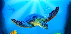 Harder Steenbeck 'Turtle Sea Life' Stencil with Step by Step Instructions