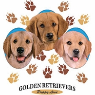 Golden Retrievers - Puppy Love Trio