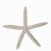 Item # 203128 - Frosted Starfish Ornament