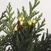 Item # 260744 - Set of 48 Christmas Tree Lights With Green Wire & Warm White Bulbs