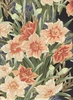 NARCISSUS IN THE SPRING: Peach, Persimmon, Black, Gold Metallic (1/2 Yd.)