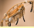"Antiqued Navajo Bow & Arrow Quiver 44"" -Red Fox (48)"