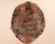 Large Genuine Beaver Hide Fur Pelt 20x23