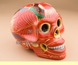 """Mexican Day Of The Dead Skull 6.5"""" -orange (s3)"""