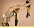 Native American Buckskin Bow & Grey Fox Quiver -Navajo  (ba88)
