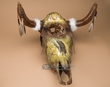 "Painted Dream Catcher Steer Skull 20""x20"" -Eagle  (s61)"