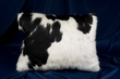 Western Cowhide Pillow  (P18)