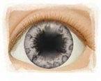 Gray � Limited Edition � Real Eyes Brand Doll Eyes