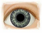 Medium Blue-Gray � Real Eyes Brand Doll Eyes