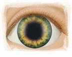 Sunrise Green � Real Eyes Brand Doll Eyes