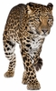 Adult Jaguar Easy-Stick Wall Art Sticker