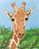 African Savanna Giraffe Stretched Canvas Art