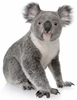 Baby Koala Easy-Stick Wall Art Sticker
