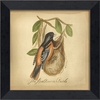 Baltimore Oriole Bird Framed Wall Art