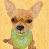 Barkley & Wagz - Chihuahua Canvas Wall Art