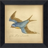 Barn Swallow Bird Framed Wall Art