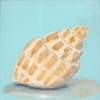 Beach Baby Nautilus Canvas Reproduction
