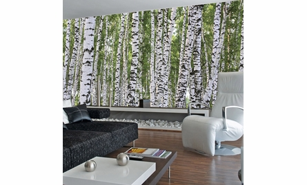 Birches Wall Mural