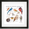 Birds of North America Framed Art Print