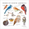 Birds of North America Poster Wall Decal