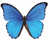 Blue Butterfly Easy-Stick Wall Art Sticker