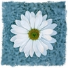 Blue Daisy Canvas Wall Art