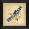 Blue Jay Bird Framed Wall Art