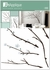 Branches Wall Decals