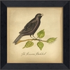 Brewers Blackbird Bird Framed Wall Art