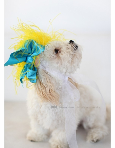 Bright Awakening Pet Headpiece