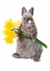 Bunny & Daffodils Easy-Stick Wall Art Sticker