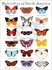 Butterflies of North America Canvas Wall Art