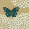 Cassiopeia Butterfly II Canvas Reproduction