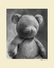 Charcoal Teddy - Cream Canvas Wall Art