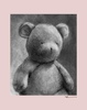 Charcoal Teddy - Pink Canvas Wall Art