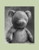 Charcoal Teddy - Sage Canvas Wall Art