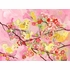 Cherry Blossom Birdies Pink Canvas Wall Art