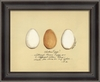 Chicken Eggs Framed Wall Art