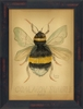 Common Bumble Bee Framed Wall Art