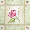 Cottage Rose Canvas Wall Art - Left Leaning