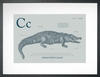 Crocodile in Blue Grey Art Print