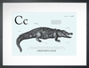 Crocodile in Light Blue Art Print