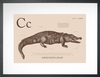 Crocodile in Sand Art Print