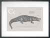 Crocodile in Warm Grey Art Print