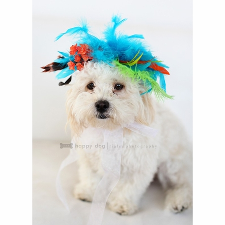 Cutie PupTootie Pet Headpiece