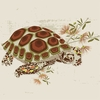 Desert Tortoise Canvas Wall Art