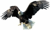 Eagle Easy-Stick Wall Art Stickers