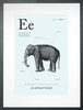 Elephant in Light Blue Art Print